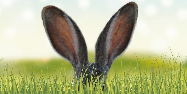 Kaninchenohren schauen aus dem Gras hervor